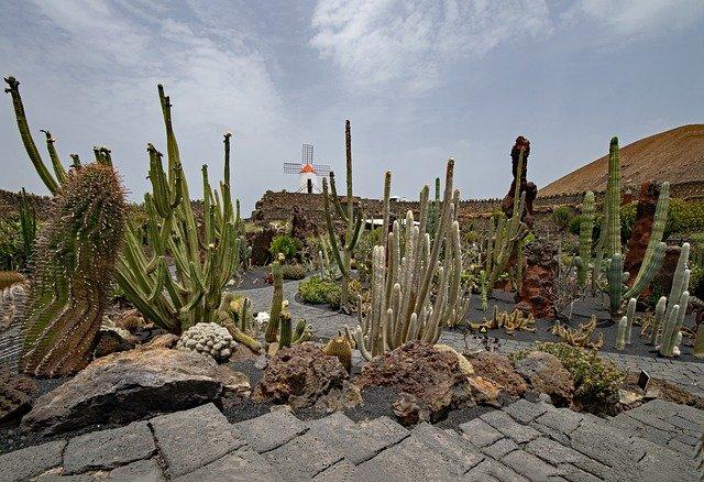 kaktushaven lanzarote
