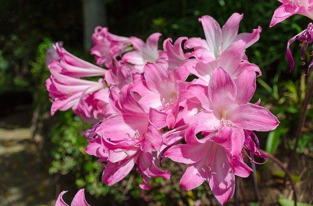 botanisk have funchal