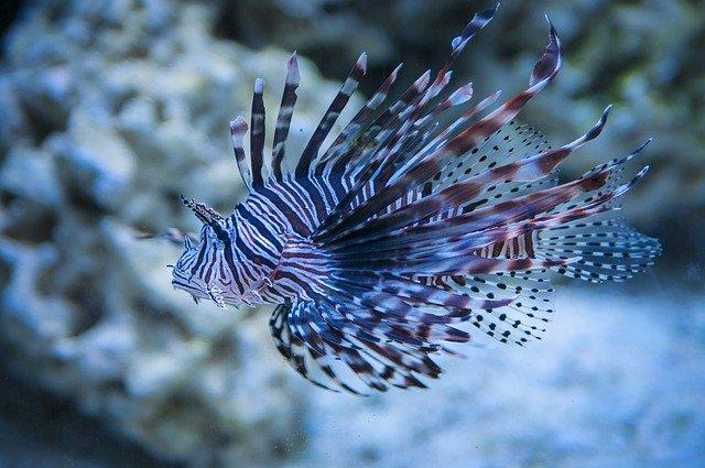 ding dongs reef