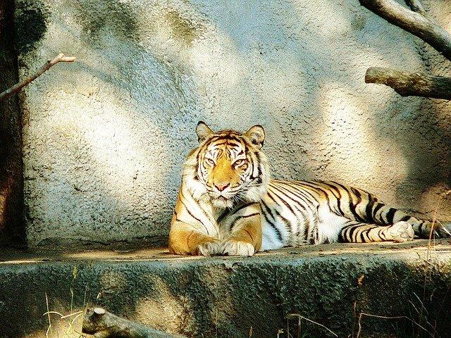 seattle zoo seværdighed