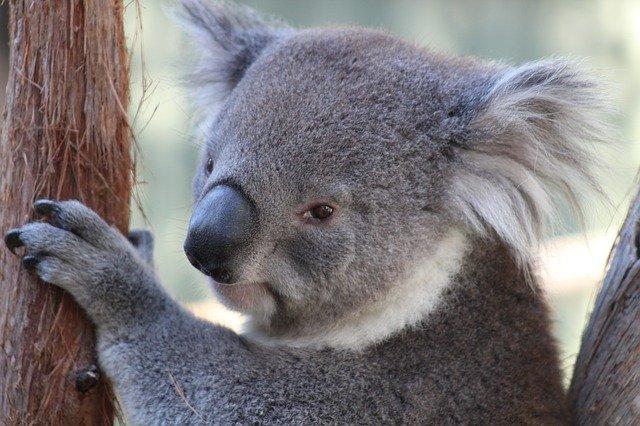 Australien seværdigheder