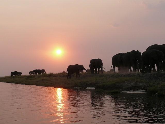 Fantastiske safarioplevelser i Botswana