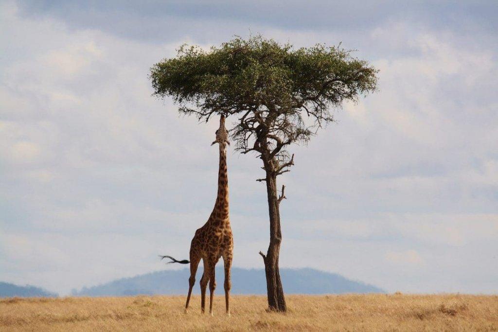 Billige flyrejser til Afrika