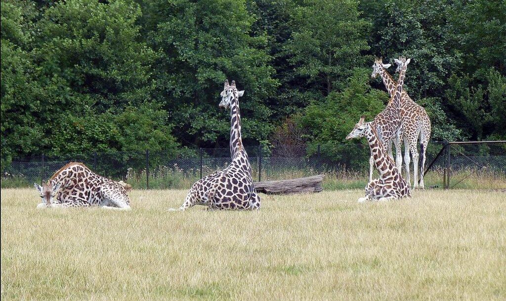 Knutheborg Safaripark